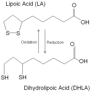 alpha lipoic acid steroidology