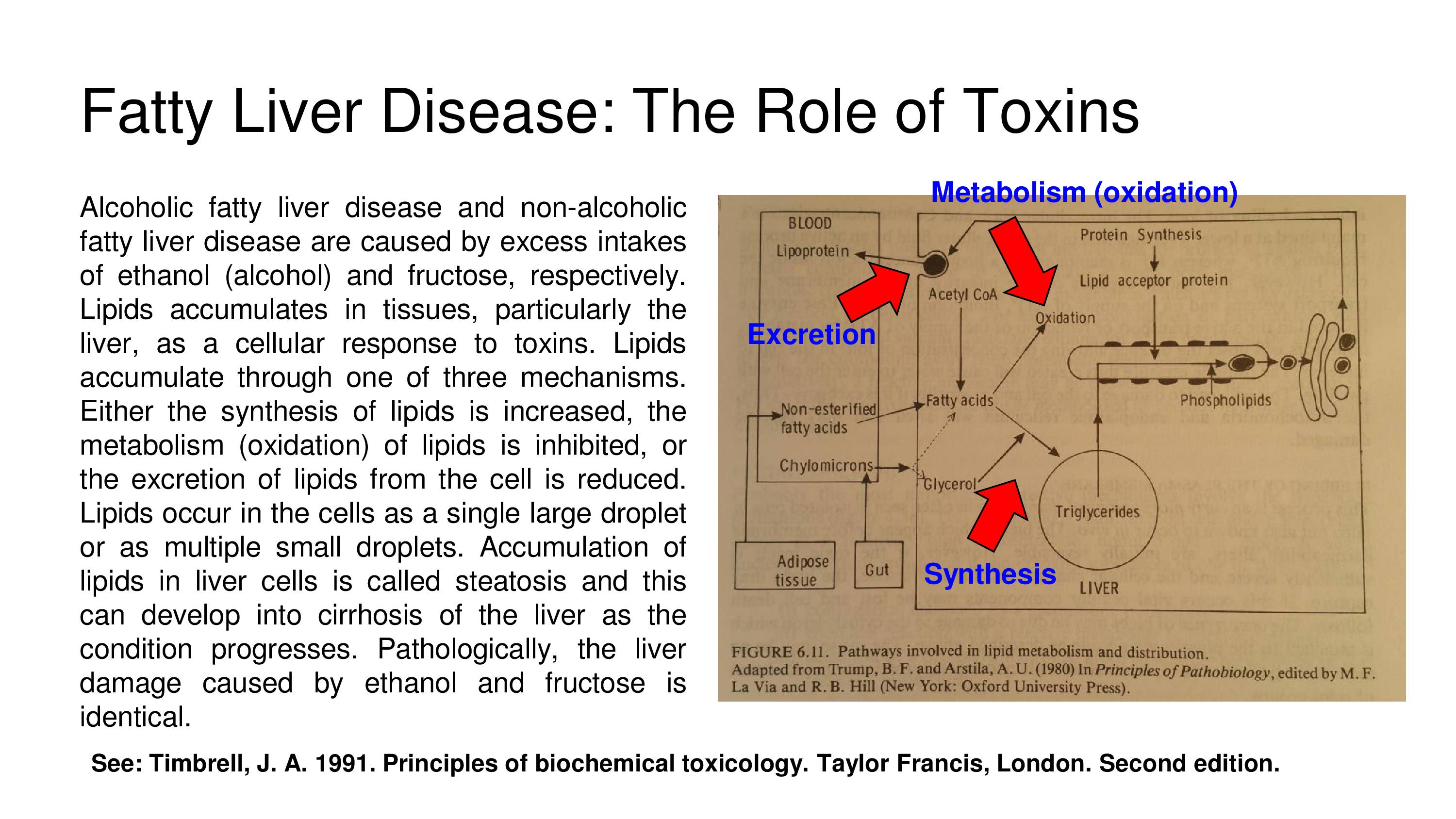 Fatty liver disease the role of toxins toxins liver ccuart Gallery