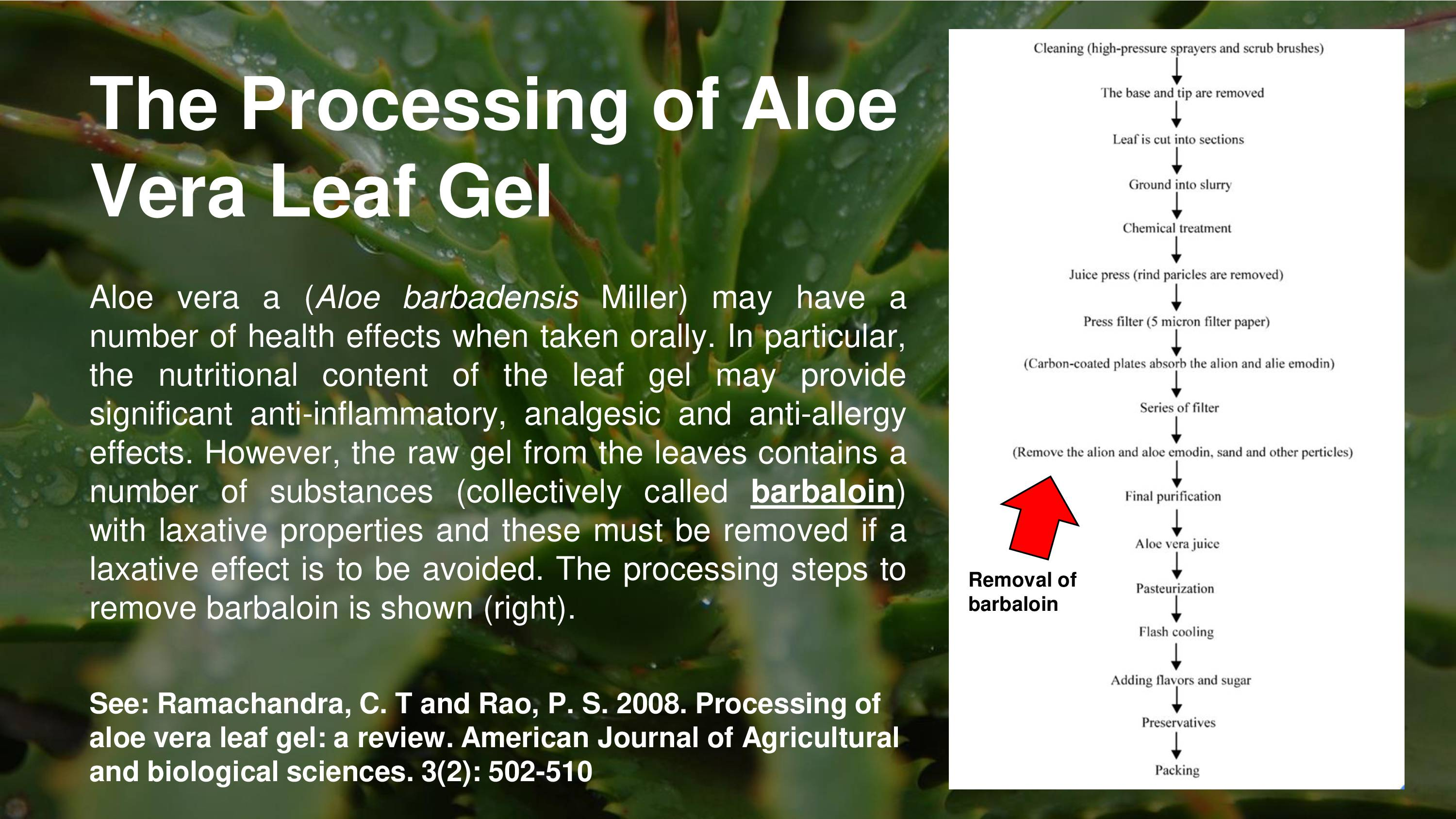 How to Extract, Use and Store Aloe Vera Gel