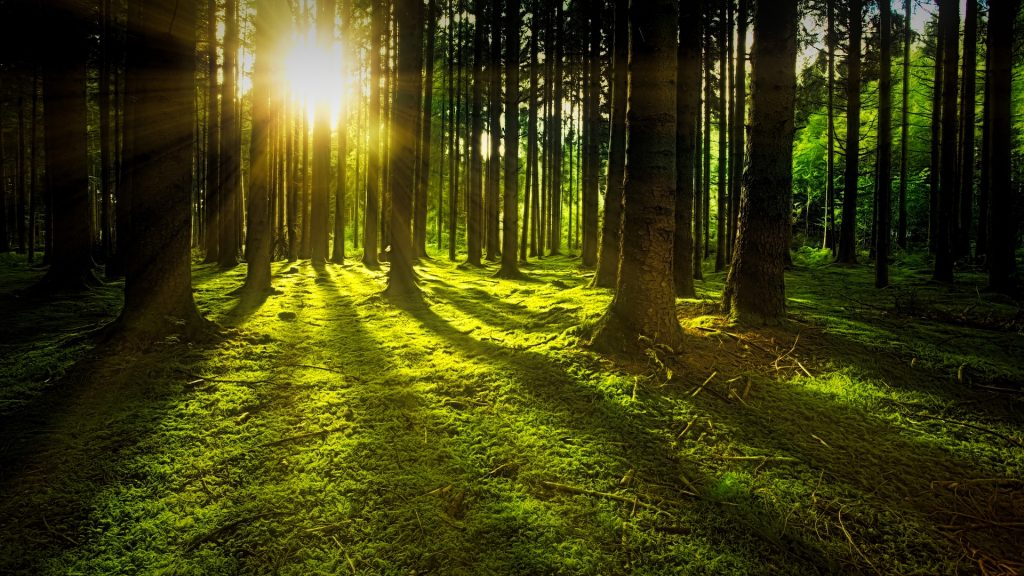 vitamin D sunlight mood anxiety depression