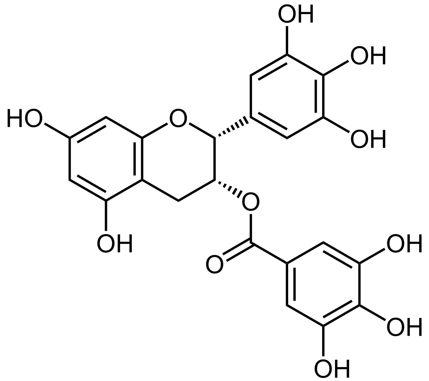 green tea catechin obesity weight loss